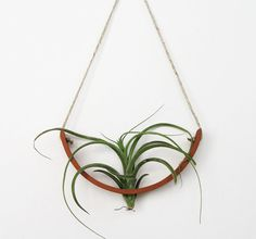 Air Plant Cradle by Mudpuppy