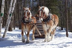 #Horse and sleigh