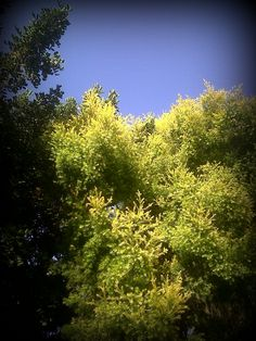 Yellow and green 2013