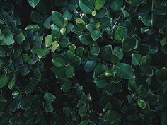 . . #agameoftones #artsofvisual #illgrammers #createcommune #earthofficial #rooftops #chasingrooftops #trellingmumbai #trell #mypixeldiary #majhimumbai  #theblogissue #cntgiveitashot #moodygram #tonechasermy #exklusive_shot #shoottokill #vsco #vscoundia #photosclub #solitarypixels #dysco #green #photoofday #instagram #commedesgarcons #communityfirst #thecreativeaffair #tumblr #tumblrgirl