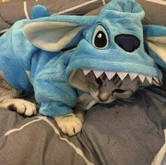 Top 20 Funny animals about Cats Cute Cats And Kittens, Cool Cats, Kittens Cutest, Kitty Cats, Cute Funny Animals, Cute Baby Animals, Animals And Pets, Funny Cats, Wild Animals