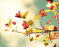 autumn photography fall leaves 8x10 8x12 nature by mylittlepixels