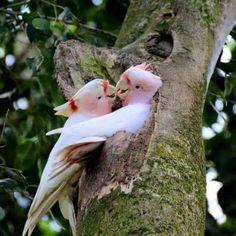 Imagenes De Lindas Parejas De Aves Para Usar Como Fondo Del Celular