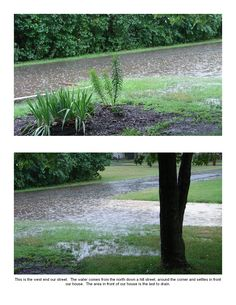Why we needed a rain garden-pic4