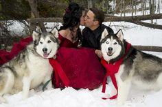 Dogs in wedding - Studio Kiva Photography