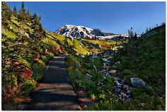 Paradise pathway Mount Rainier National Park, Washington State, Pathways, View Photos, Climbing, Landscape Photography, Paradise, National Parks, Scenery