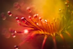 Otherwordly Macro Photography by Joni Niemela | Inspiration Grid | Design Inspiration