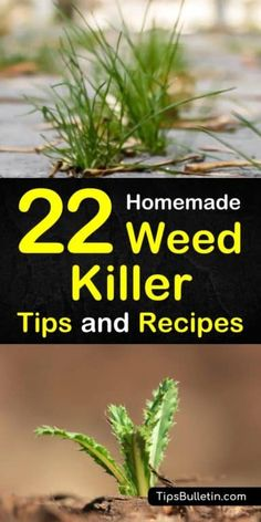 Homemade Weed Killer Recipes: 22 DIY Tips for Killing Weed Learn how to create a homemade weed killer recipe for your flower beds, yards, and driveways. Combine natural ingredients to make sprays safe for grass, for gardens, and for lawns. Grass Weeds, Weeds In Lawn, Garden Weeds, Fruit Garden, Vegetable Garden, Garden Grass, Herbs Garden, Organic Gardening, Gardening Tips