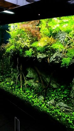 From my twitter feed, a ledge aquascape.