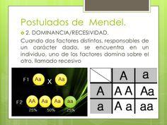 Postulados de Mendel. 2. DOMINANCIA/RECESIVIDAD.Cuando dos factores distintos, responsables deun carácter dado, se encuen...