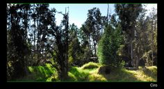Eukalyptus Chill out!
