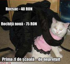 Poze amuzante pisica imbracata pentru scoala