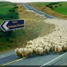 Προβατααααα! Albania, Bulgaria, Costa, Funny Memes, Jokes, Have A Laugh, True Words, Yolo, Funny Photos