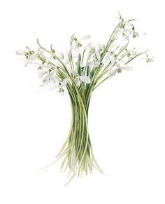 71 x 81 cm framed<br />Mum's Snowdrops<br />Sold Botanical Drawings, Botanical Prints, Botanical Gardens, Watercolor Disney, Watercolor Flowers, Watercolour, Daffodil Bulbs, Daffodils, Home Wall Art