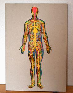 livre d'anatomie / papier découpé