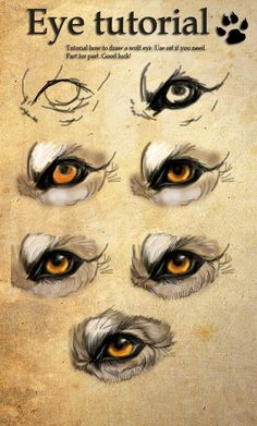 Image result for wolf eye