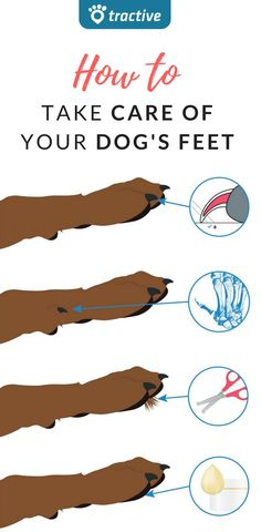 Tips About Paw Care For Dogs | How to Take Care Of Your Dog's feet | 4 Essential Tips About Paw Care
