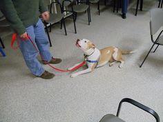 "Simon says ""I don't wanna stay! Dog Classes, Simon Says, Sayings, Dogs, Animals, Animales, Lyrics, Animaux, Pet Dogs"