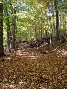 Best Hiking Trails in the Washington, DC Area, Including Hundreds of Miles of Trails in Maryland and Virginia