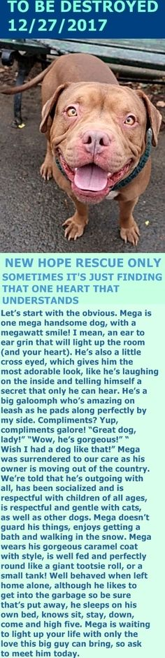 SAFE 12/29/17 --- Hello, my name is Mega. My animal id is #16143. I am a desexed male tan dog at the Manhattan Animal Care Center. The shelter thinks I am about 3 years 1 weeks old.  I came into the shelter as a returns on 21-Dec-2017. http://nycdogs.urgentpodr.org/milo-16143/
