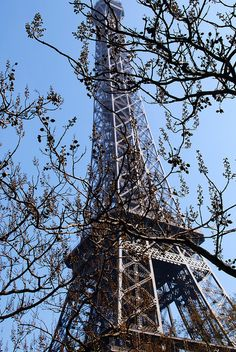 Discover the Eiffel Tower through tree branches ...