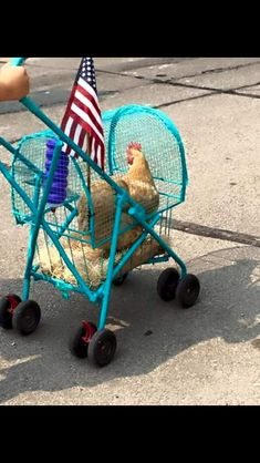 Pet Stroller: Perfect for dogs, cats, rabbits, even for chickens! - All About Gardens Chickens And Roosters, Pet Chickens, Chickens Backyard, Silkie Chickens, Chicken Humor, Chicken Lady, Keeping Chickens, Raising Chickens, Farm Animals