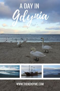 When I visited my friend who lives in Gdansk a few weeks ago, we also decided to visit a city called Gdynia what is famous for its port. So we hoped in SKM, which costs around 4 zlotys per person to get from Gdansk to Gdynia, and went to explore the… Europe Travel Tips, Travel Guides, Travel Destinations, Poland Travel, Visit Italy, Collaboration, Exploring, Nerdy, Bucket