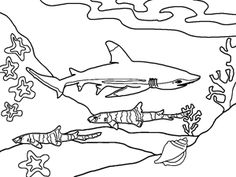 great white shark coloring pages online | Shark Coloring Pages (12) - Coloring Kids | Coloring Pages ...