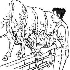 disegno mungitura delle pecore da colorare  disegno mungere pecore  pecore e capre munte in sala di mungitura da colorare  agnello  agnellino disegno