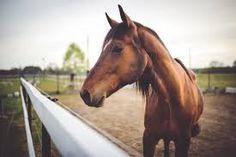 Bildergebnis für pferde