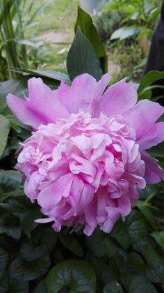 Little Things, Garden Inspiration, Flower Power, Bloom, Herbs, Rose, Drawings, Pretty, Gardening