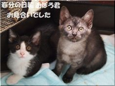 里親さんブログ春分の日組☆お見合い&家族募集 - http://iyaiya.jp/cat/archives/76917