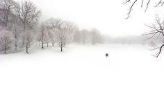 Prospect Park // Brooklyn