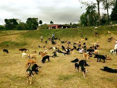 """A ONG """"Territorio de Zaguates"""" é um abrigo localizado na Costa Rica considerado um dos melhores lugares do planeta para um cão  viver.o-paraiso-dos-vira-latas-respeito-aos-animais-costa-rica-blog-usenatureza"""