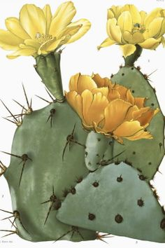 Cactus with Yellow Flowers Botanical Print Cactus Print Yellow Cactus Blossom Botanical Illustration Desert Art Desert Home Decor Cactus Drawing, Cactus Painting, Cactus Art, Cactus Flower, Flower Art, Cactus Decor, Flower Film, Cactus Blossoms, Vintage Botanical Prints