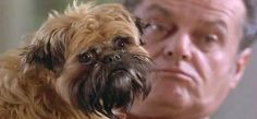 I'd watch a whole movie with just this dog......Verdell!