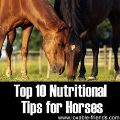 Top 10 Nutritional Tips for Horses ►► http://www.lovable-friends.com/top-10-nutritional-tips-for-horses/?i=p
