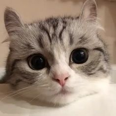 Those eyes! join our group happy cats - video i̇zle - i̇ndir v Funny Cats And Dogs, Cute Cats And Kittens, Baby Cats, Cool Cats, Kittens Cutest, Baby Animals, Funny Animals, Cute Animals, Funny Cat Photos