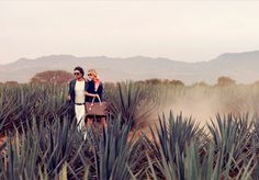 Un viaje por Mexico. Tequila, Jalisco.