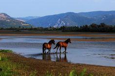 Moldova, Montana, Places, Travel, Geography, Flathead Lake Montana, Viajes, Trips, Tourism