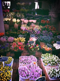 Flower Markets <3