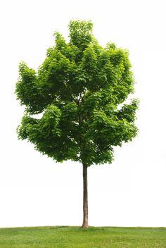 Árvore usada no trabalho bimestral.