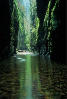 Oneonta Gorge, Oregon The Emerald Canyon- it has 4 waterfalls!
