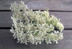 Google Image Result for http://offmotorway.files.wordpress.com/2011/06/elderflowers.jpg