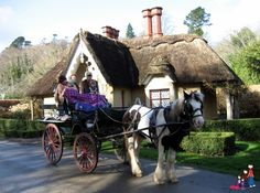 Fun in Killarney!  A jaunting cart ride through Killarney National Park, a visit to Muckross House & Traditional Farms.