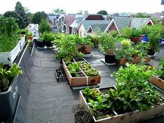 Johanne Daoust's | #Roof-top #vegetable #garden | 2009 | Toronto | Ontario | Canada.