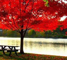 autumn, beautiful, nice, orange, red