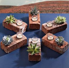 Succulent Bricks