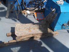 L'ultimo rostro ritrovato a 80 metri sul fondo sabbioso del mare di Levanzo