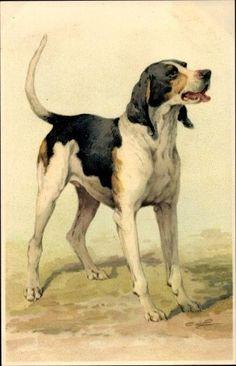 Die 76 Besten Bilder Von Vintage Hunde Illustrationen Dog